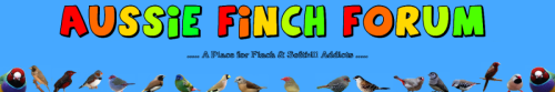 Aussie finch forum