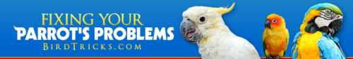 Training DVDs, Parrot Food,  & Natural Toys