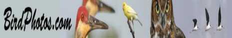 BirdPhotos.com