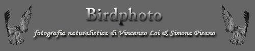 BIRDPHOTO di Vincenzo Loi e Simona Pisano
