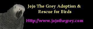 Jojo The Grey Adoption and Rescue for all Birds