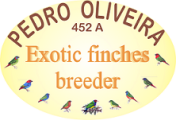 PEDRO OLIVEIRA - Exotic finches breeder