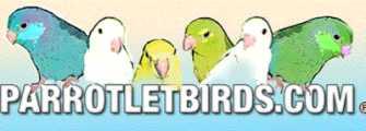 Parrotletbirds