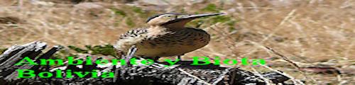 Ambiente y Biodiversidad de Bolivia