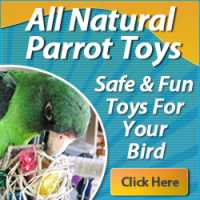 100% NATURAL, SAFE TOYS, DELIVERED EVERY MONTH!