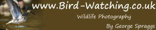 www.bird-watching.co.uk