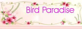 The Best Place For Bird LOvers