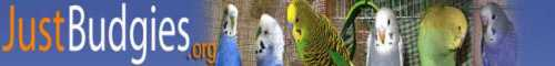 Just Budgies