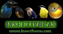 insectivoras