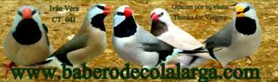 www.baberodecolalarga.com