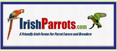 Irish Parrots