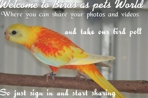 birds as pets world