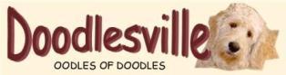 Doodlesville Labradoodles & Goldendoodles
