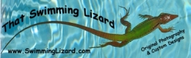 That Swimming Lizard