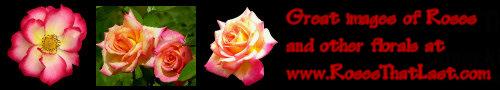 Roses That Last