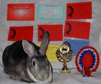 Mel's Rabbits