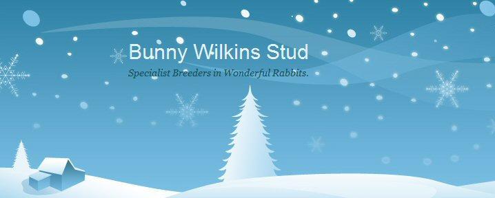Bunny Wilkins Stud