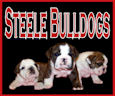 Steelebulldogs Champion bulldog stud service and champion sired bulldog puppies