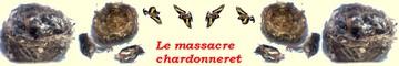le massacre chardonneret
