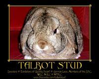 Talbot Stud