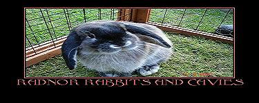 radnor rabbits and cavies