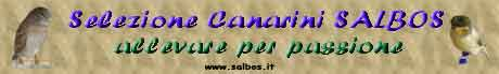 Selezione canarini Salbos
