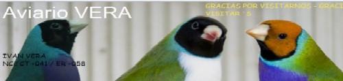 www.aviariovera.com