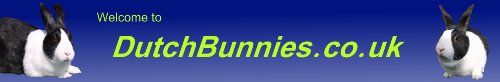 DutchBunnies.co.uk - Gillingham Kent