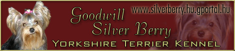 Goodwill Silver Berry