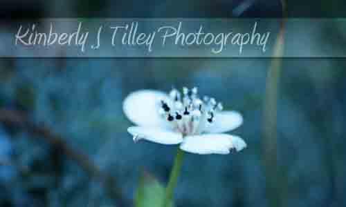 The Portfolio of Kimberly J Tilley
