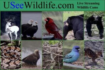 USeeWildlife - Live Wildlife Cams