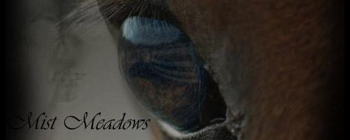 Mist Meadows