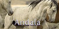 Andala
