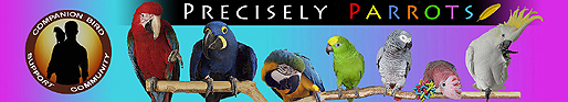 Precisely Parrots Companion Bird Forums