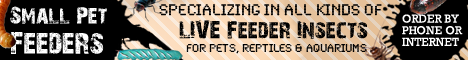 Small Pet Feeders
