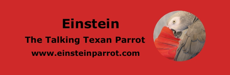 Einstein The Talking Texan Parrot