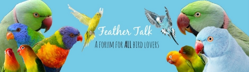 Feather Talk