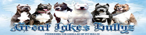 Great Lakes Bullyz