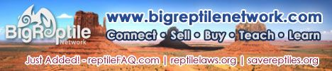 Big Reptile Network | #1 Online Directory