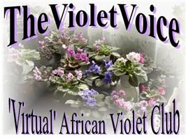 The Violet Voice