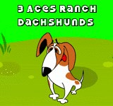 3 ACES RANCH MINI DACHSHUNDS