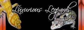 Luxurious Leopards