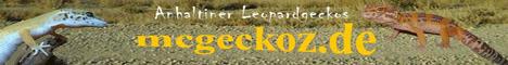 Anhaltiner Leopardgeckos
