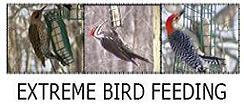 Extreme Bird Feeding