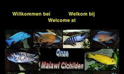 Screenshot of Our malawicichlids