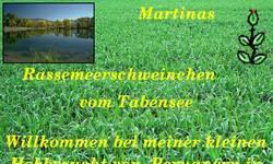 Screenshot of Martinas Meerschweinchen vom Tabensee