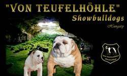Screenshot of 'Von Teufelh�hle' English Bulldogs