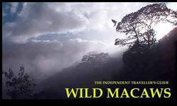 Screenshot of Wild Macaws