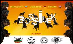 Screenshot of bossilek.com