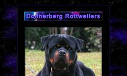 Screenshot of Donnerberg Rottweilers